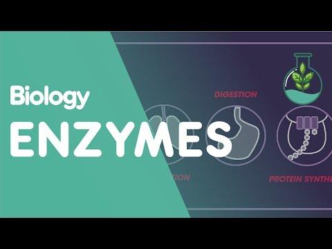 Enzymes | Cells | Biology | FuseSchool