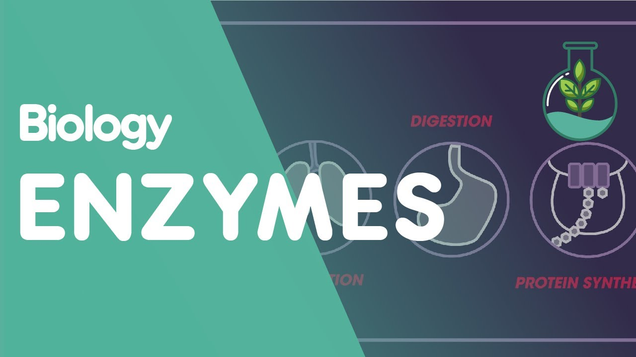 enzymes biology for all fuseschool youtube