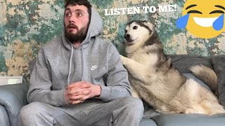 Never Ignore A Siberian Husky! [THE FUNNIEST ENDING EVER!!]
