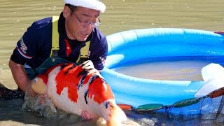 DOCUMENTARY | JAPAN SECRETS |  THE MYSTERIOUS WORLD OF KOI