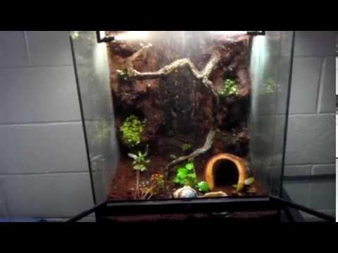 gargoyle gecko terrarium vivarium youtube. Black Bedroom Furniture Sets. Home Design Ideas
