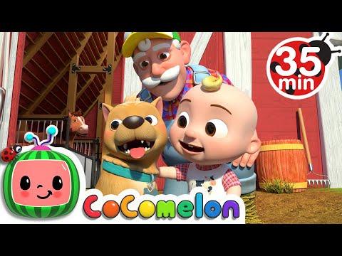 Bingo (Farm Version) + More Nursery Rhymes & Kids Songs - CoComelon