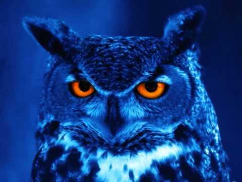Alek Szahala - Afternoon Owl