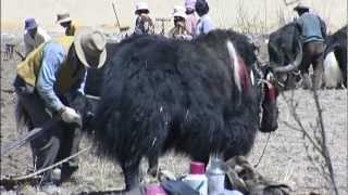 Farm Life, Lhasa, Tibet - China Travel Channel