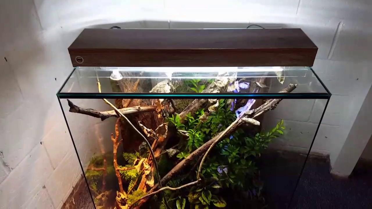 Carpet python natural vivarium habitat setup - YouTube