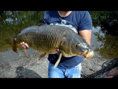 صيد سمك الشبوط (كارب / Carp) Hqdefault