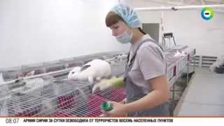Ушастый бизнес: в России – бум кролиководства(Кролиководческий бизнес европейского уровня создал волжанин Николай Корнеев. Его ферма – это селекционно-..., 2015-10-09T09:58:11.000Z)