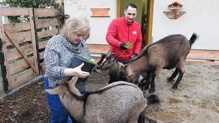 Pflegeheim mit Mini-Zoo