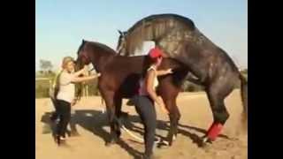 Покрытие лошади