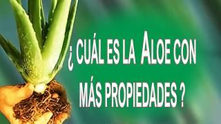 ¿Cuál es Aloe con mas propiedades ?