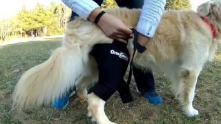 Protector de rodilla para perro
