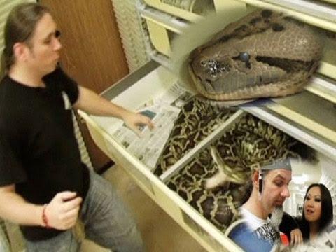 Snake Bytes TV - Huge Snakes! :  SnakeBytesTV