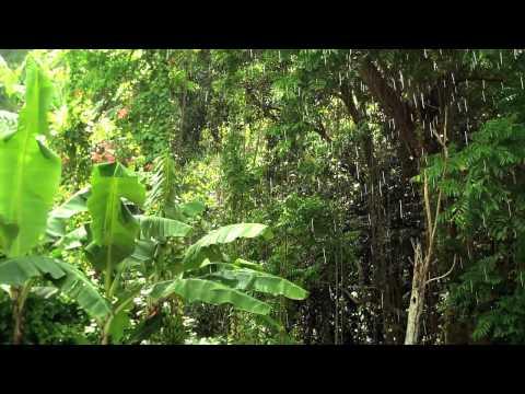 St. Lucia Rainforest Sun-Shower