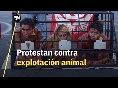 El derecho de los animales a ser rescatados – La Ley de Rose por la liberación animal