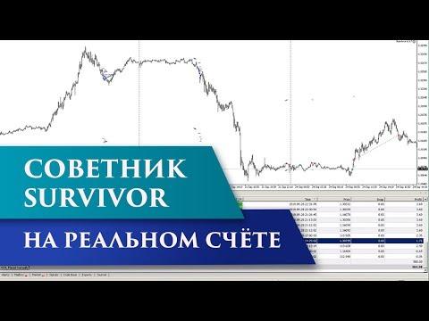Советник Survivor | Тестирование советников на реальных счетах