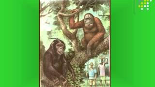 Презентация Происхождение человека в системе животного мира  Эволюция гоминид