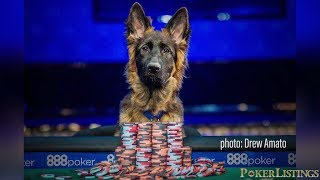 Dog Beats Odds to Play World Series of Poker!