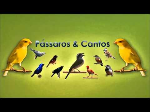 Cantos da Natureza - Varios Passaros Cantando