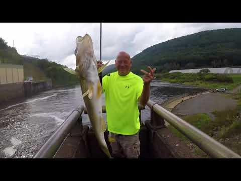 Catching Walleye 30 Feet Above The Water