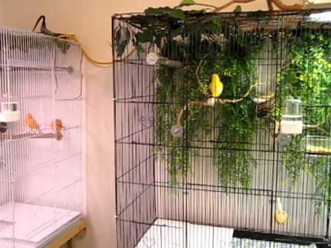 How to Build An Aviary Review: Can You Build Yours In Just One Day?