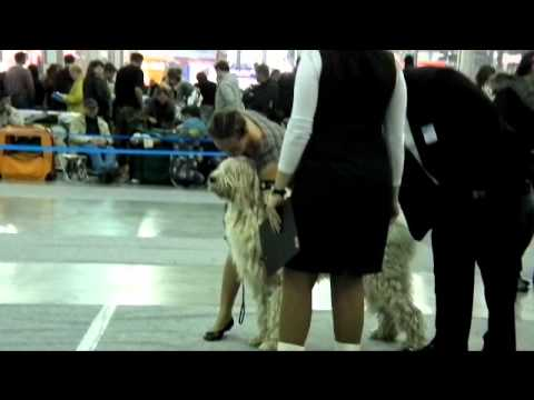 THE INTERNATIONAL DOG SHOW RUSSIA 2011