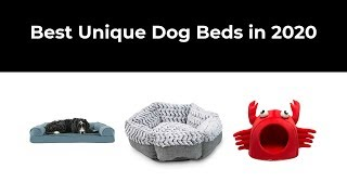 Best Unique Dog Beds in 2020