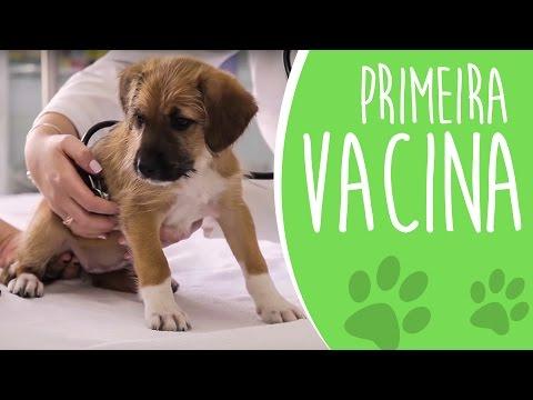 Primeira vacina de um filhote   Importância e cuidados [Ju Almeida Pet]