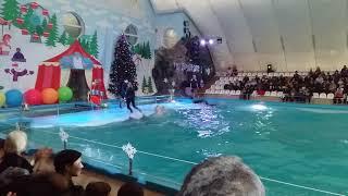 """Шоу дельфинов и морских обитателей(Харьковский дельфинарий""""НЕМО"""")6"""