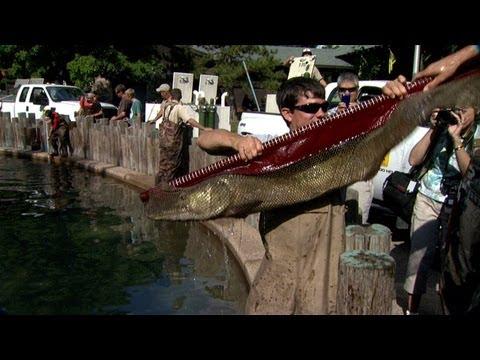 DNR State Fair Fish Pond Stocking