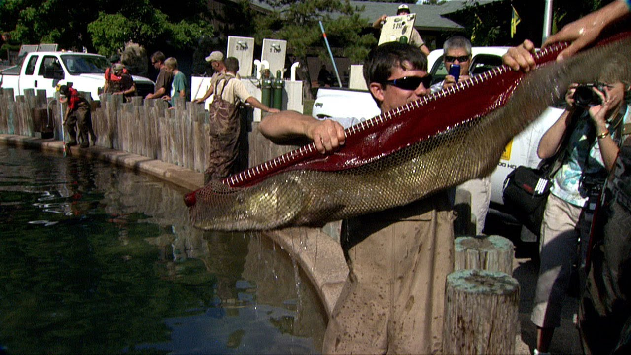 Dnr state fair fish pond stocking youtube for Buy pond fish