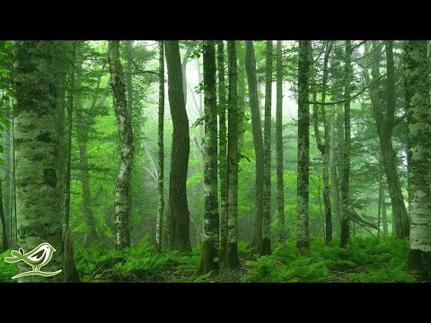 Beautiful Relaxing Music: 'Deep in the Forest' by Peder B. Helland (Official Video)