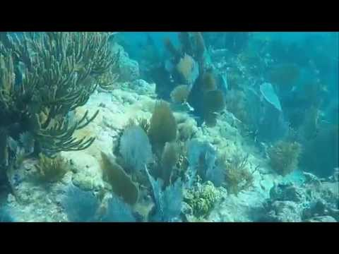 Molasses Reef 2015