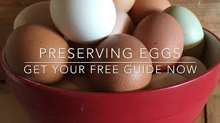 HOW TO PRESERVE EGGS - A FREE GUIDE!
