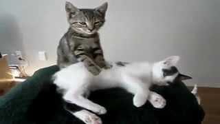 Những Pha Khó Đỡ Của Chó Và Mèo