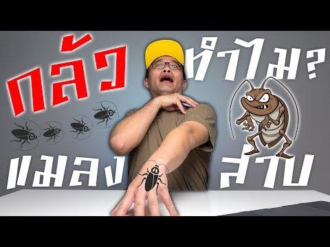 ทำไมผู้หญิงถึงกลัวแมลงสาบ ?!? ASKJO 5.5