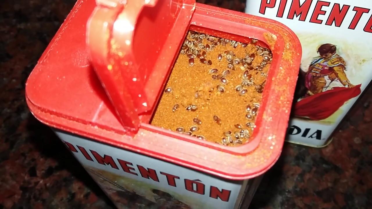Bichos en el piment n youtube for Bichos en el colchon