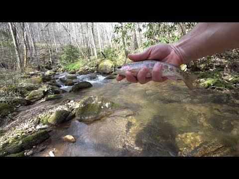 Turtle & Buck Creek, NC ( Between Highlands - Franklin)