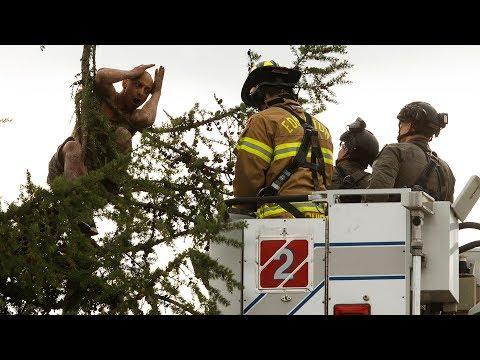 Distraught man in tree rescued by Edmonton emergency responders