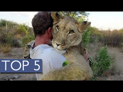 Top 5 Unlikely Animal Friendships