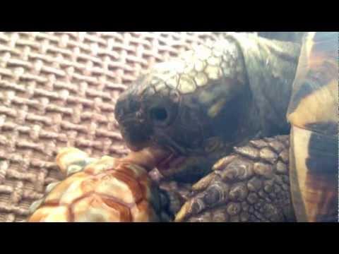 It's a tortoise eat tortoise world mp3