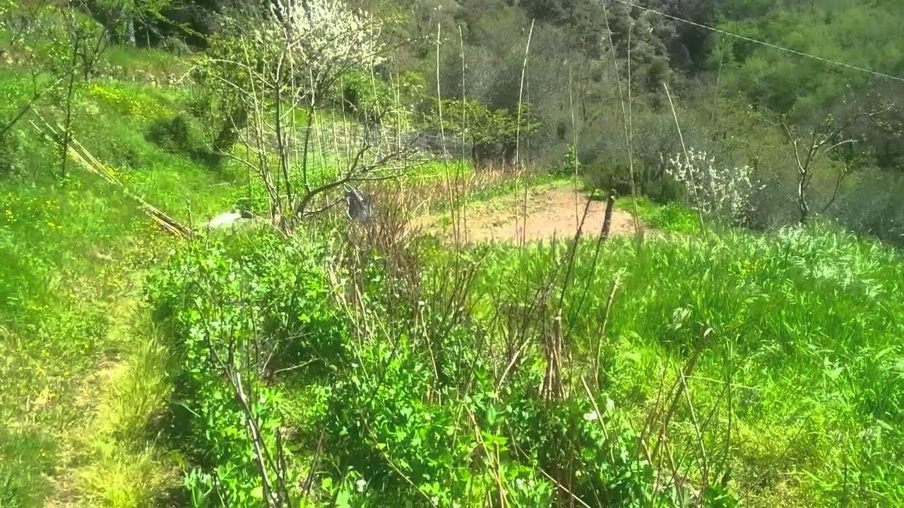Casa del Sole e la coltivazione del riso in terrazza - YouTube