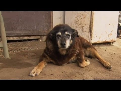 World's Oldest Dog, Maggie, Takes her Last Nap
