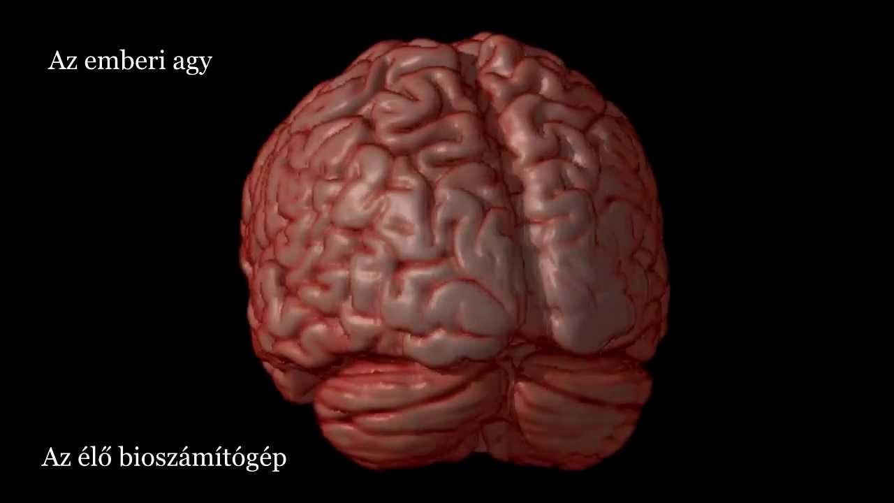 agy és látás videó látásgyakorlás kezelése