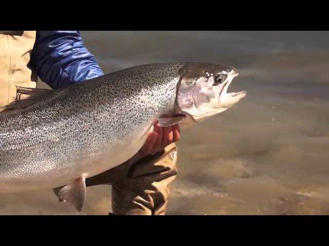 Jurassic Lake Lodge fishing Report 21-28 Nov 2015 www.jurassiclakelodge.com