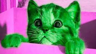 МОЙ МАЛЕНЬКИЙ КОТЕНОК Мультик ИГРА для Детей Симулятор котенка  Little Kitten My Favorite Cat