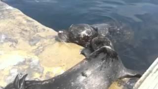 Benji the seal pup