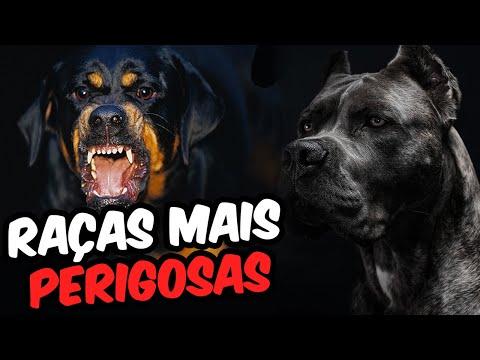 Top 10 Raças De Cachorro Mais Perigosas Do Mundo