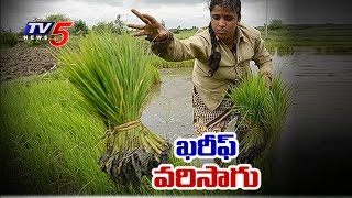 Kharif Rice | Suggestions For Paddy Cultivation In Kharif Season | Annapurna | TV5 News