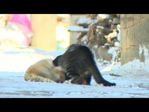Cats Fighting 고양이 싸움