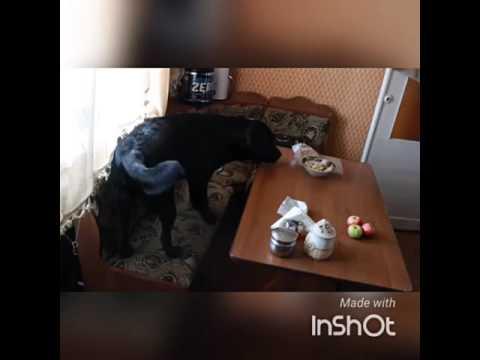 Скрытая видеокамера дома